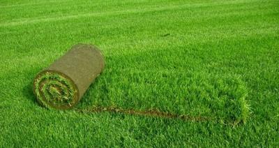 Стоянка и езда на газоне разрешена при условии, что газон - современный и устойчивый к вытаптыванию