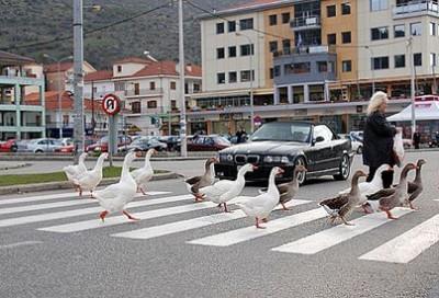 штраф не уступил дорогу пешеходу